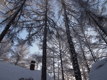 冬の外観3