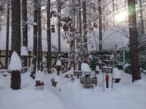 冬・カラマツ林の中の宿