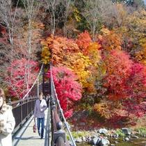 紅葉と山ゆり橋