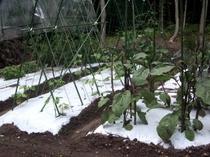 COCO菜園