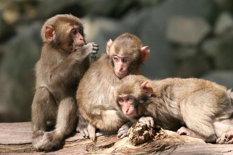 『高崎山自然動物園』の小猿さん♪ 当館より車で20分!