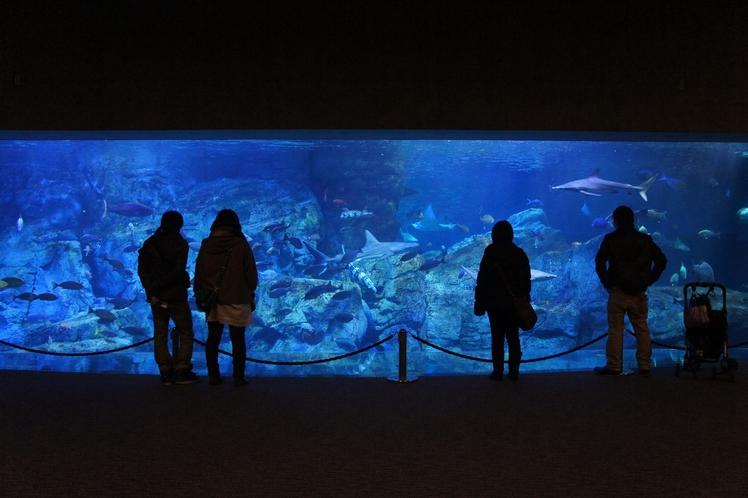 海の生物たちを身近に感じる水族館♪ 当館より車で20分!大分マリーンパレス水族館『うみたまご』