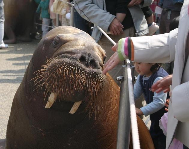 セイウチやイルカのパフォーマンスが人気♪ 当館より車で20分!大分マリーンパレス水族館『うみたまご』