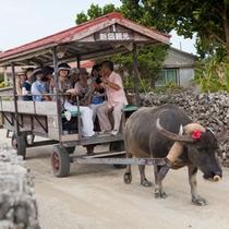 *【水牛車観光】三線を弾きながら、島内の美しい町並みをの〜んびり案内してくれます♪