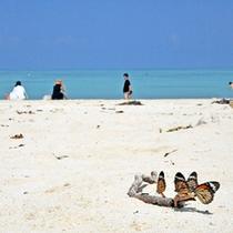 *【コンドイビーチ】八重山諸島・屈指の美しいビーチ。穏やかに流れる島時間を楽しんでください。