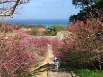 【周辺】桜と共に東シナ海が眺望できます。