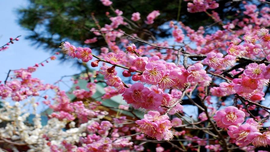 ◆北野天満宮梅花祭画像①