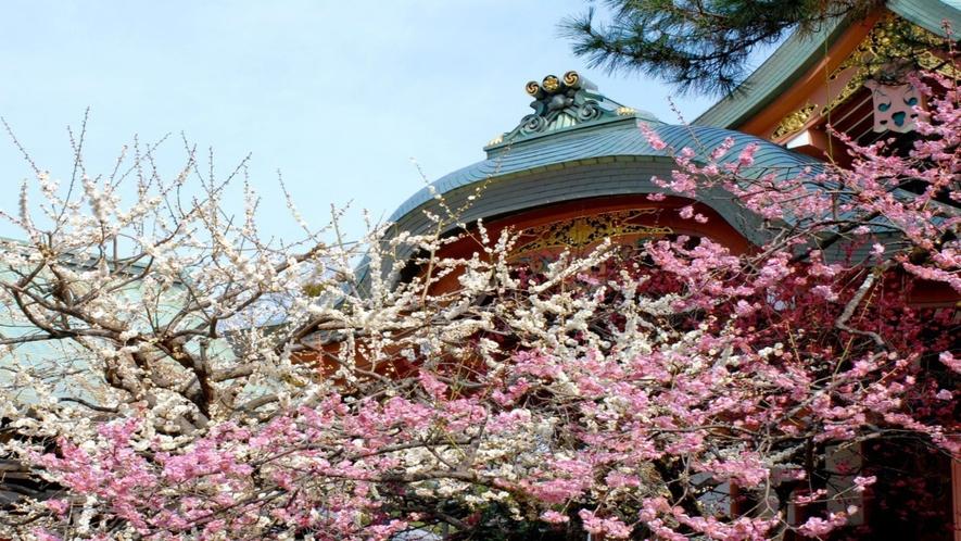 ◆北野天満宮梅花祭画像②
