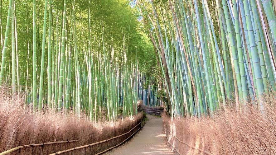 ◆嵐山の竹林の小径
