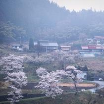 *【春】周辺風景/春は、山々にピンク色の桜が咲き誇ります。