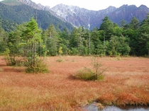 草紅葉の田代湿原