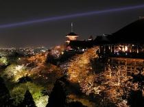 清水寺の美しいライトアップ  清水寺までは当館より徒歩で約25分