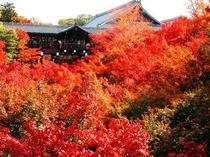 秋にお出掛け下さい。紅葉の名所東福寺、当館より電車を利用して約20分