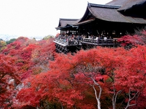 秋にお出掛け下さい。清水寺の紅葉