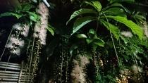 カヌーの早朝ツアーに行かなくても、池田屋に泊まると庭で見られますよ
