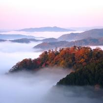 雲海に浮かんだ備中松山城の姿は幻想的