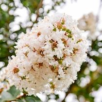 *施設内では季節の花をご観賞いただけます。