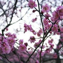 *施設内:梅園の様子③ 12種類250本の梅の木がございます。