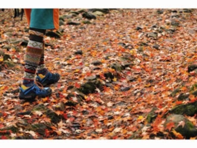 紅葉の遊歩道