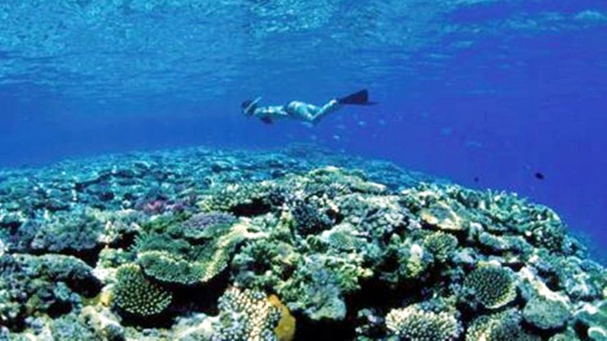 *サンゴ/さんご礁には色鮮やかな熱帯魚がたくさん!
