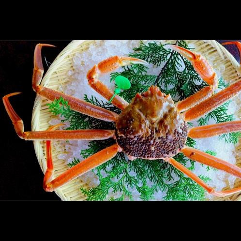 【間人蟹】間人ガニの宿泊プランの方は活きた状態でお見せしています