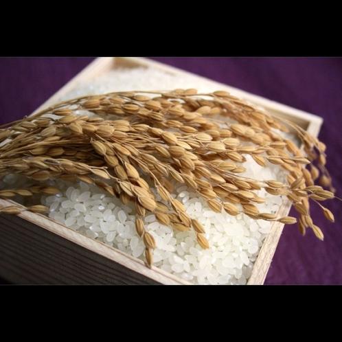 【丹後コシヒカリ米】西日本で特Aランクを幾度も獲得した自慢のお米を使用します