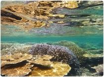 西表島のサンゴの海