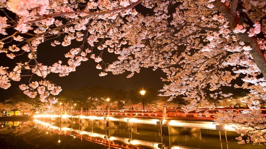 観桜会 夜桜②