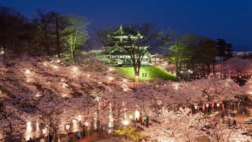 観桜会 夜桜①
