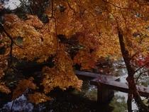池泉式回遊式庭園<秋>