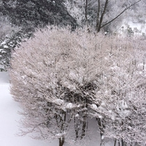 冬の自然が作った芸術。樹氷