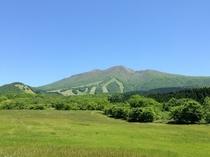 夏の秋田駒ヶ岳。多数の高山植物が楽しめる。
