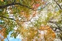 誓湖荘の秋