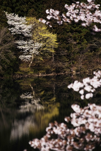 赤谷湖の春