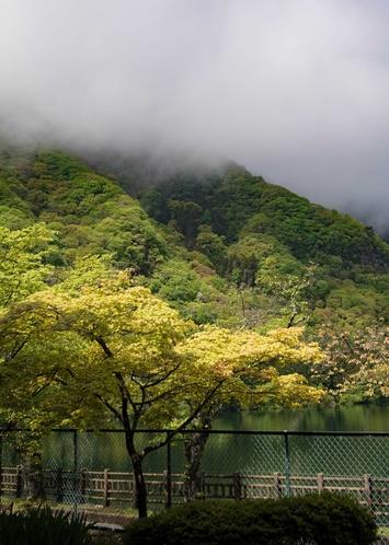 赤谷湖の新緑