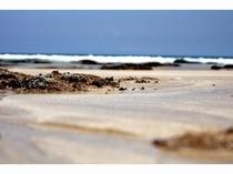 白浜海岸、夏