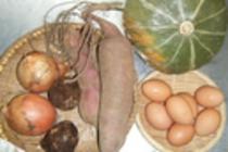 健康にやさしい自然農法野菜