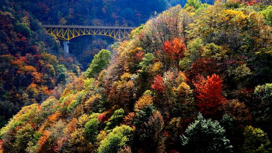 **【秋の滝川渓谷】全長3km、高低差約300mの遊歩道から大小様々な滝が連続する珍しい景色。