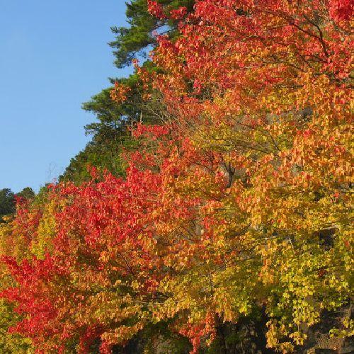 ◇秋は紅葉に包まれます