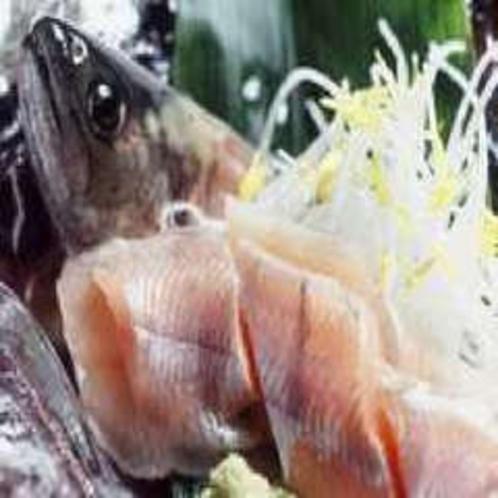 川魚のお造り※イメージ