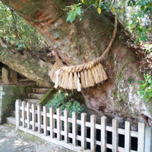 <高千穂神社>天真名井。樹齢1300年のケヤキの木の下から清水が湧き出る。
