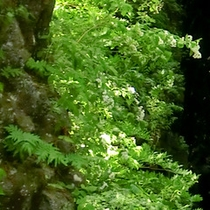 <高千穂峡>神秘的な景色は、パワースポットとしても人気です。