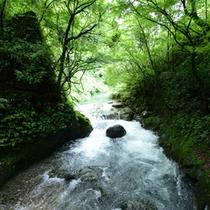 <天安河原>木々が鮮やかに茂る、川のそばの小道を歩いていると、自然からパワーを感じます。