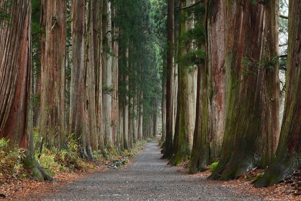 「長野県民支えあい 信州割SPECIAL」松コースプラン◎フロントにてお値引き又はキャッシュバック
