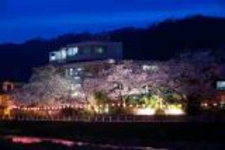 清流荘 夜桜