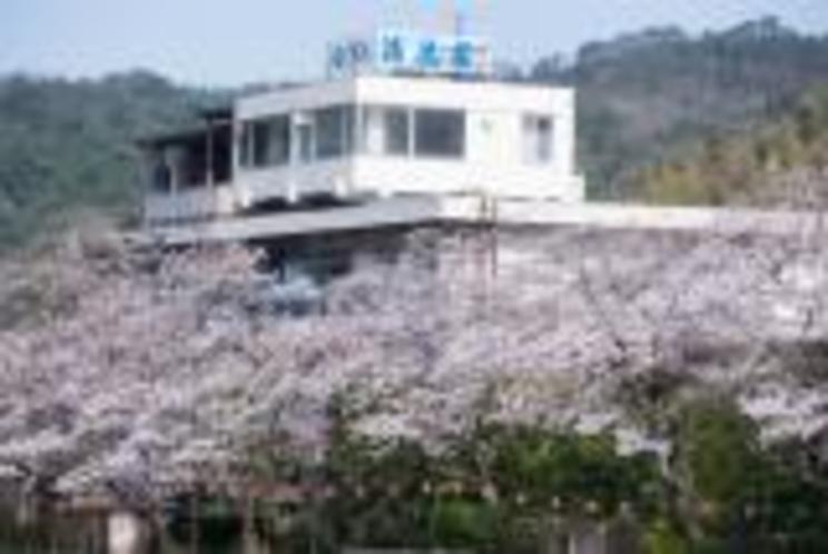 まんか〜い(4月上旬風景)