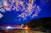 三朝を彩る清流夜桜