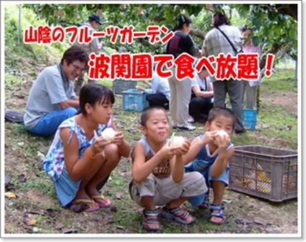 梨狩り♪本場の味『二十世紀梨』