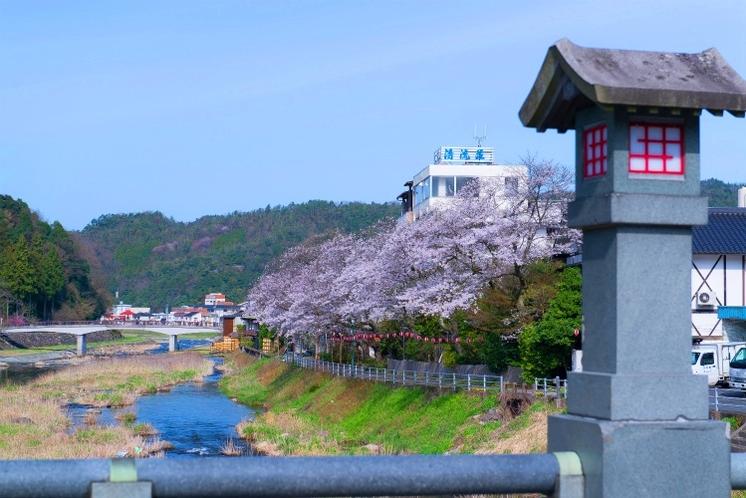 桜満開!清流さくらDEお花見spa♪