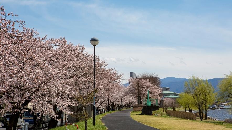 【諏訪湖】春の桜。諏訪湖が色付きます。
